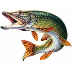 Geddefiskeri